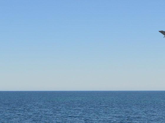 Blue Sky Strategies